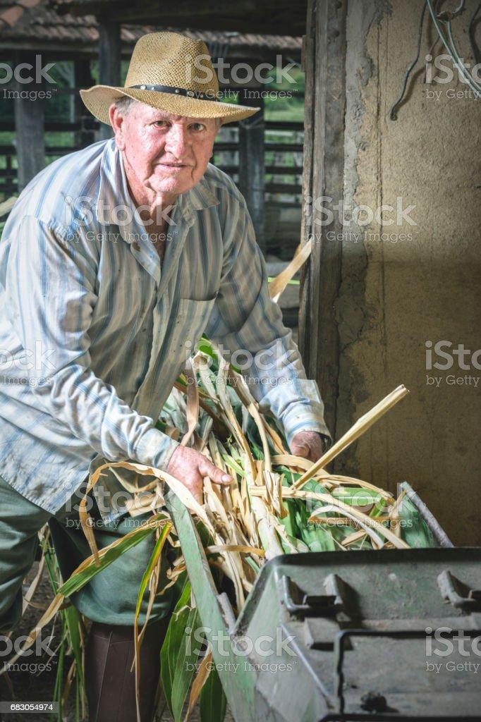 Farm worker foto de stock royalty-free