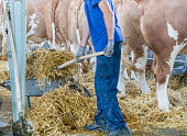 The farm worker is cleaning his cows