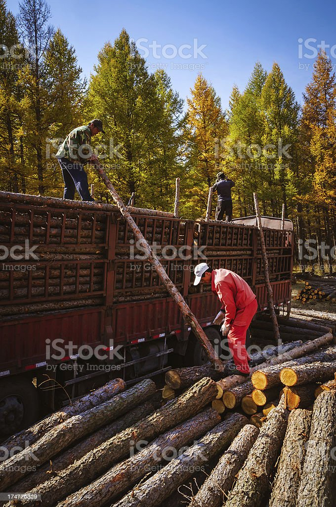 Farm workers are loading timber royalty-free stock photo