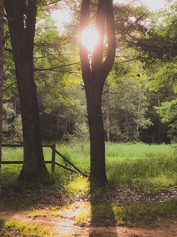 Beautiful morning landscape scenery of the morning sun caught in between the tree branches on this northern Wisconsin hobby farm photograph. Old wooden fencing, green meadows, and sunbeams captured in the scene.