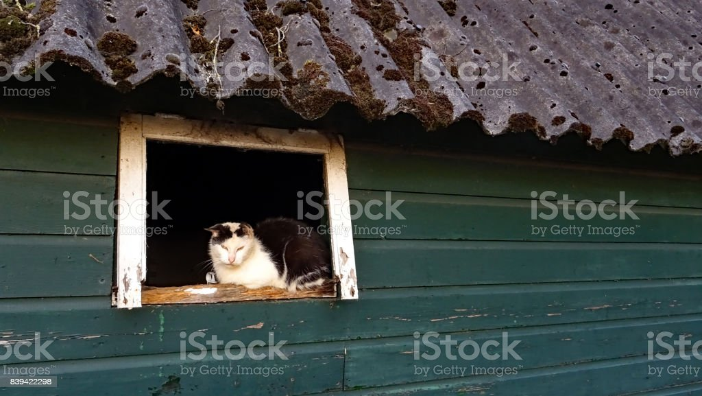 Farmcat in the window of an old barn stock photo