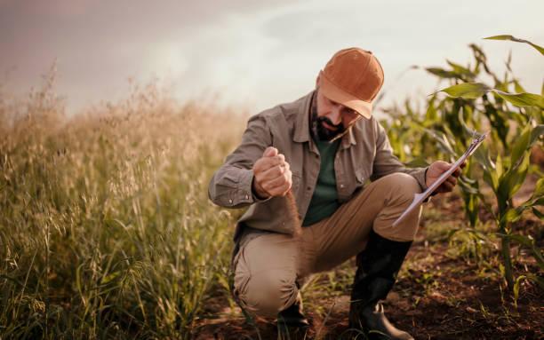 landwirt analysiert sein land - landwirtschaftlicher beruf stock-fotos und bilder