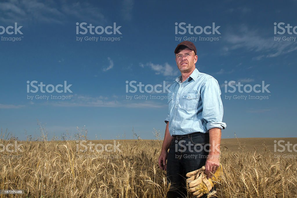 Farmer and Crop royalty-free stock photo