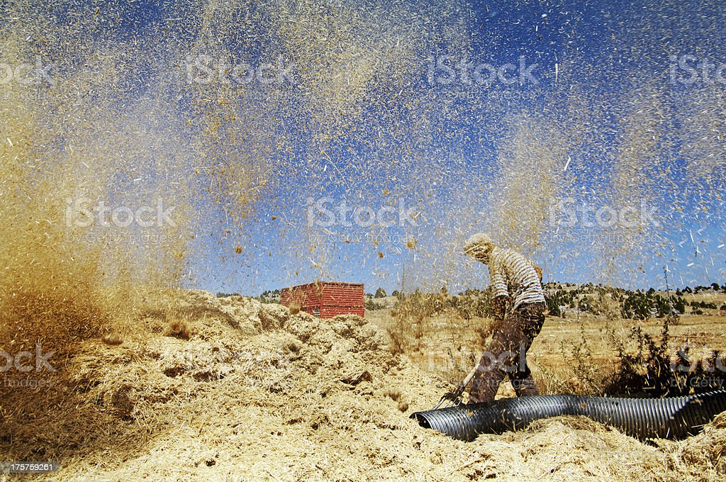 Farmer and harvest stock photo