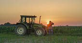istock Farmer and tractor in corn field at sunset 1216394300