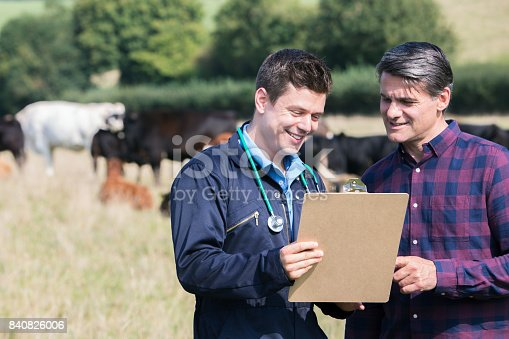 Farmer And Vet In Field With Cattle Looking At Clipboard