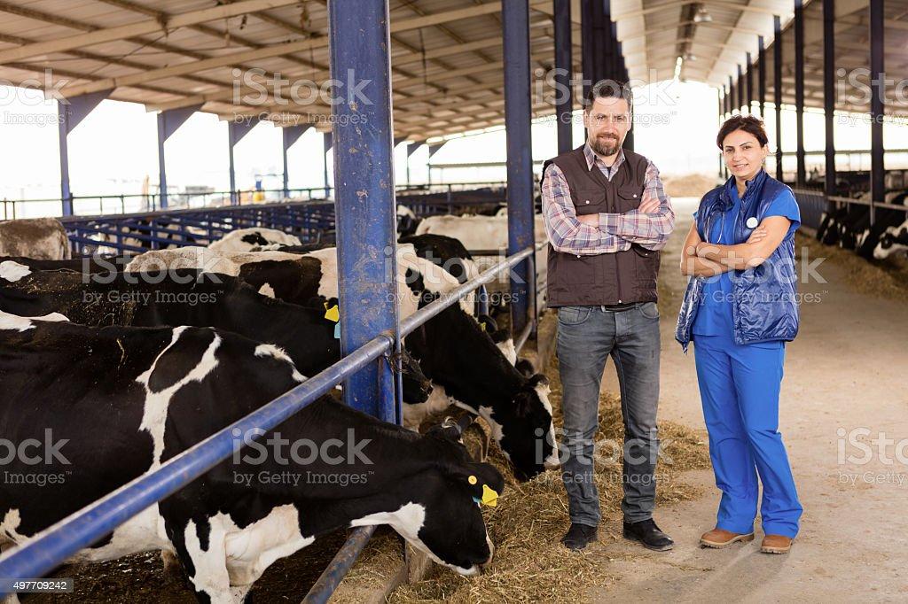 Farmer and Vet stock photo