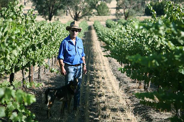 Farmer and vineyard stock photo