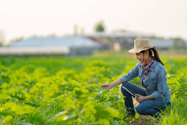 Farmer are planning to farm on tablets. stock photo