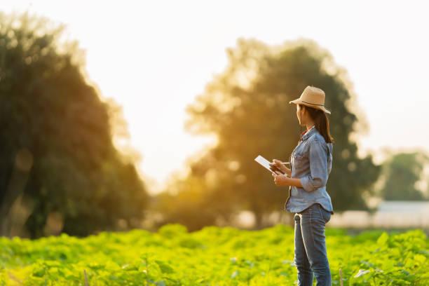 farmer are planning to farm on tablets. - coffee farmer foto e immagini stock