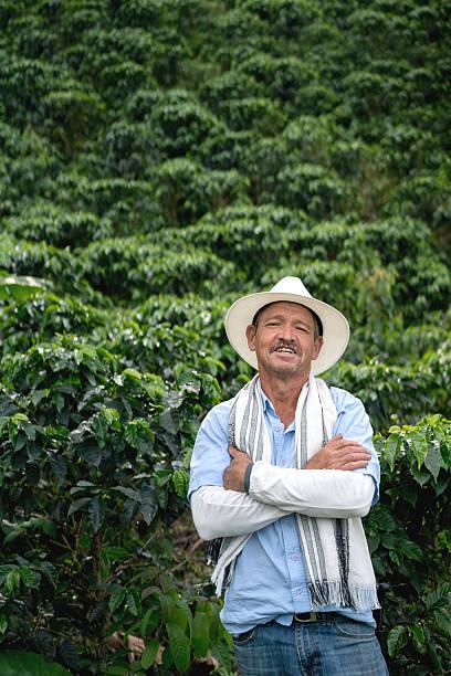 farmer at a coffee plantation - coffee farmer foto e immagini stock