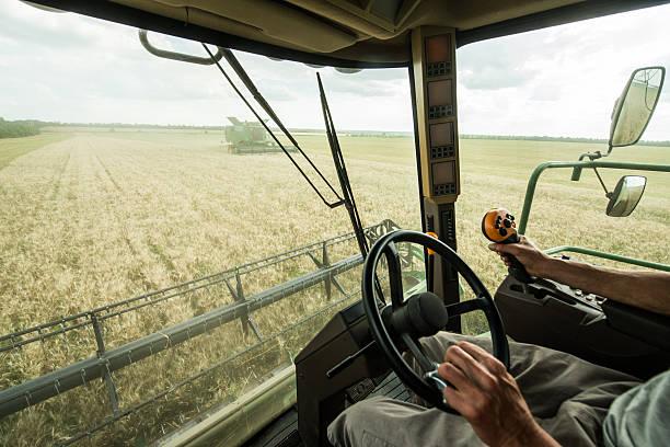 Farmer at steering wheel of сombine harvester on wheat field stock photo