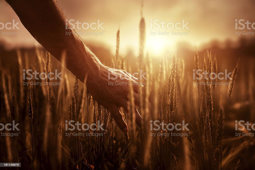 Farmer at sunset stock photo
