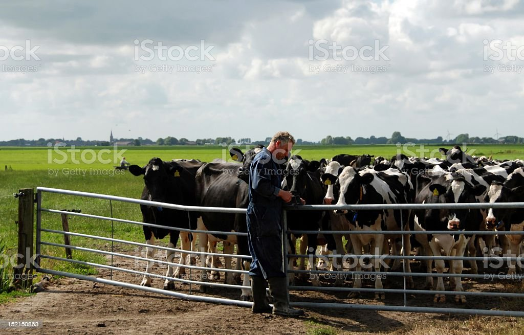 Farmer at work in Friesland in the Netherlands stock photo