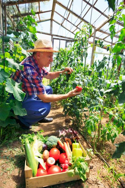 Landwirt mit Kisten mit Tomaten und Bio-Gemüse – Foto