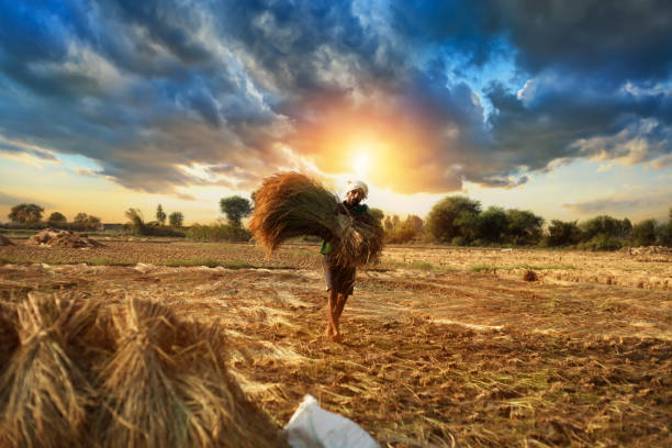 19,575 Indian Farmer Stock Photos, Pictures & Royalty-Free Images - iStock
