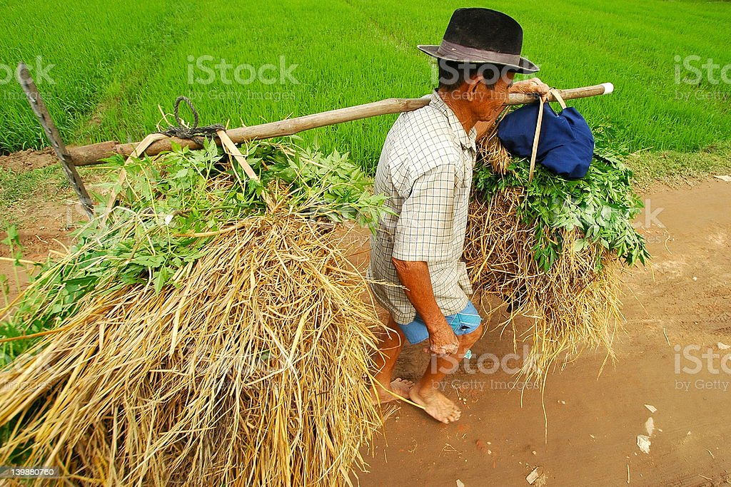 Farmer carrying straw royalty-free stock photo