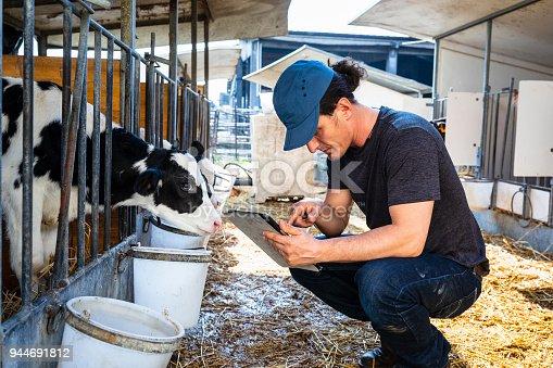 Farmer checking calf with digital tablet app