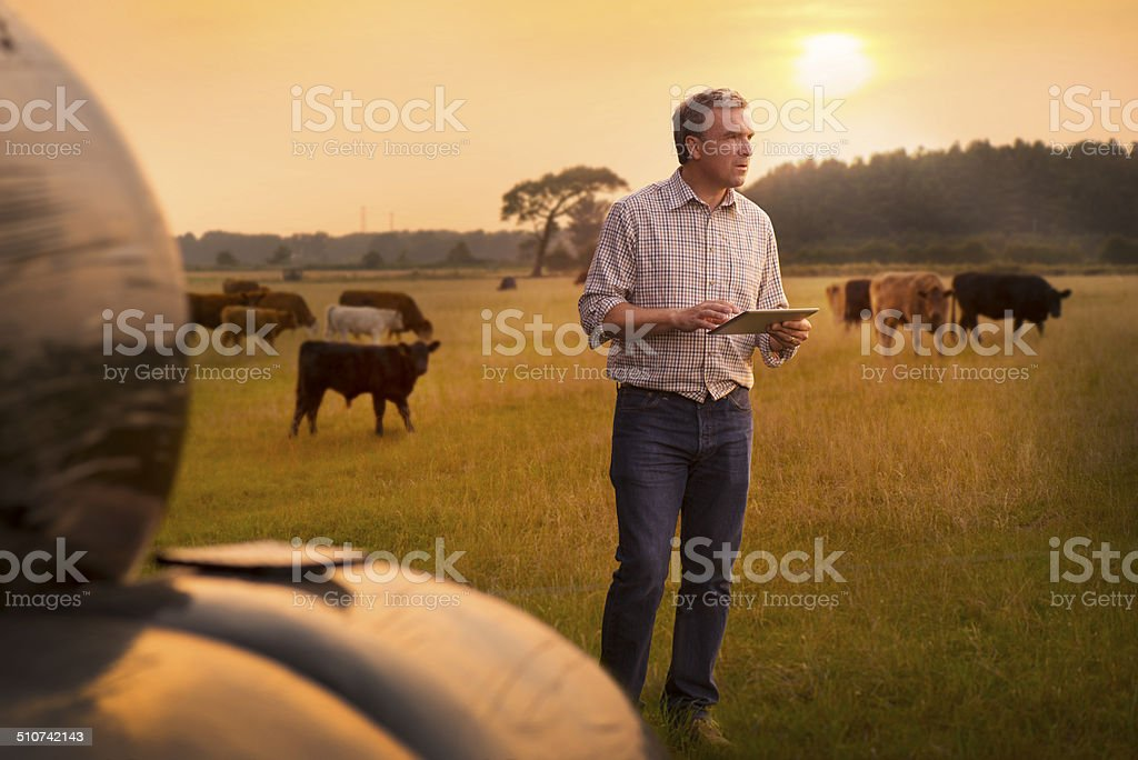 farmer verificar su ganado - foto de stock