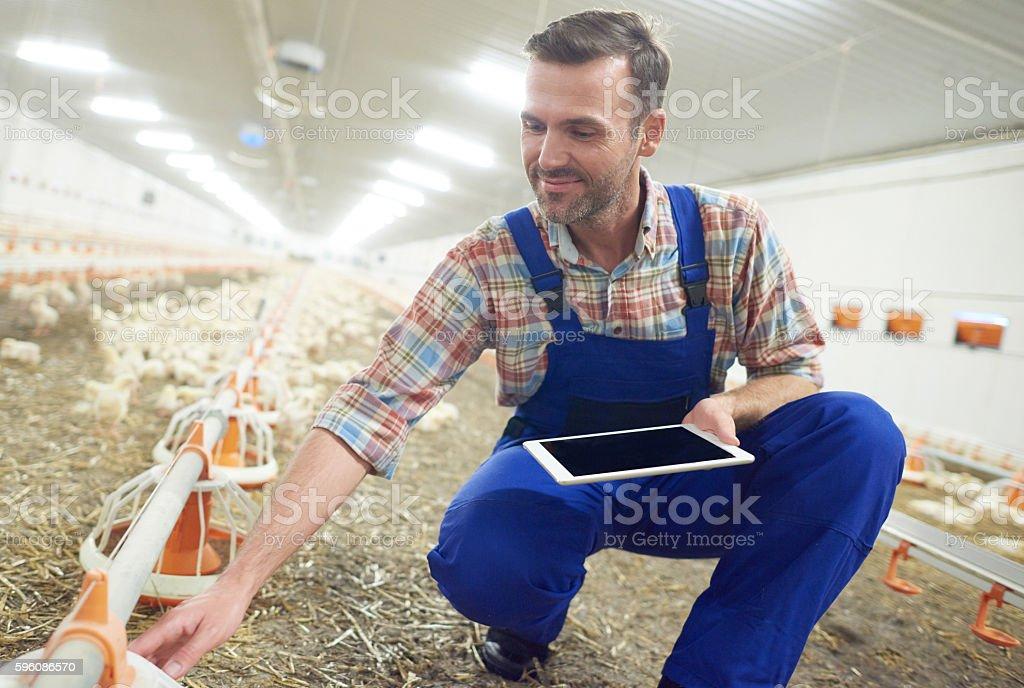 Farmer checking the feeding mechanism Lizenzfreies stock-foto
