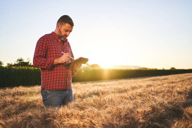 Farmer checking the quality of wheat field and writing down statistic at digital tablet stock photo