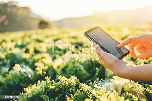 istock Farmer checking touchpad in Nappa cabbage Fram in summer 1132884861