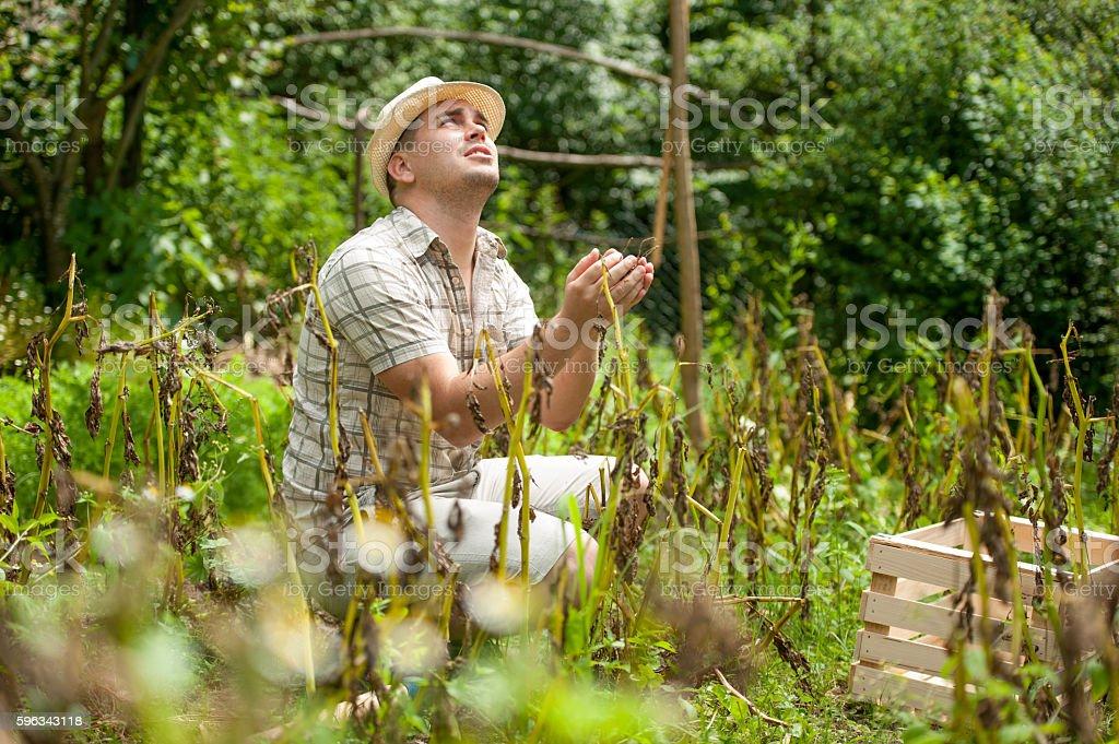 Farmer Cheking His Crops Growth Lizenzfreies stock-foto