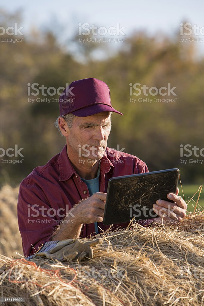 Farmer Concentrating on Information royalty-free stock photo