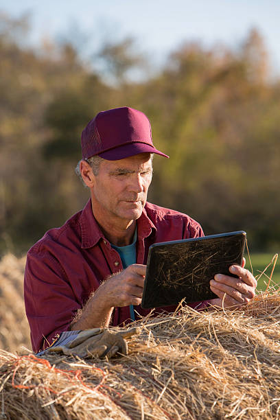 farmer concentrating on information - balpress bildbanksfoton och bilder