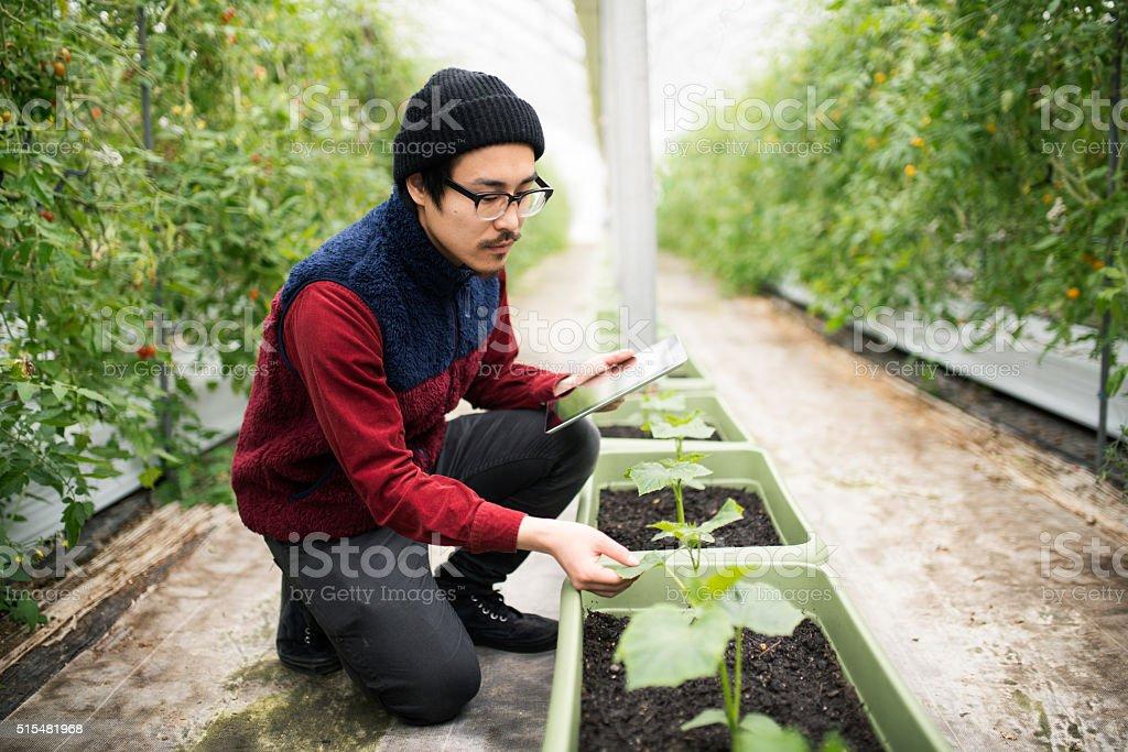 Agriculteur faire la recherche à l'aide d'une tablette numérique dans une serre - Photo