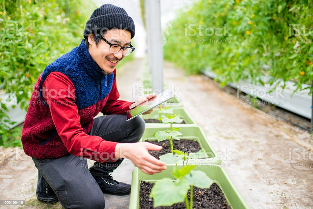 Farmer conducting research using a digital tablet in a greenhouse stock photo