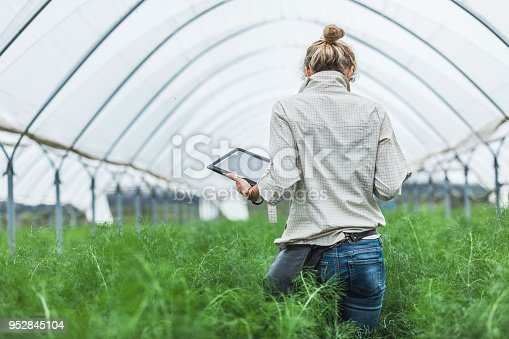 istock Farmer controlling vegetables in greenhouse 952845104
