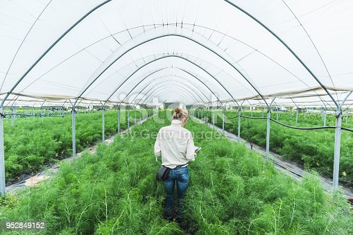 1047941544istockphoto Farmer controlling vegetables in greenhouse 952849152