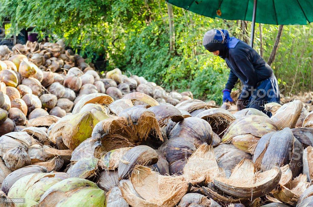 Farmer cutting coconut shell stock photo