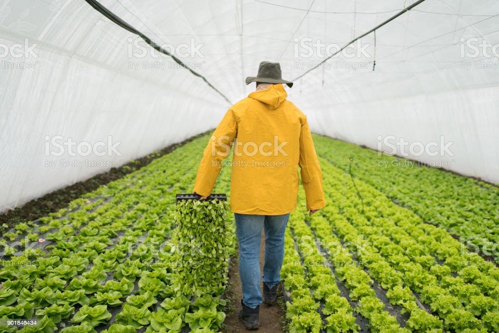 Farmer doing his job stock photo