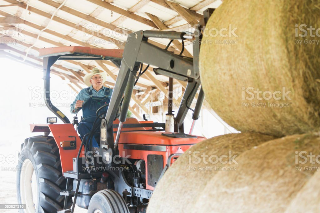 Farmer driving tractor inside barn moving bales of hay stock photo