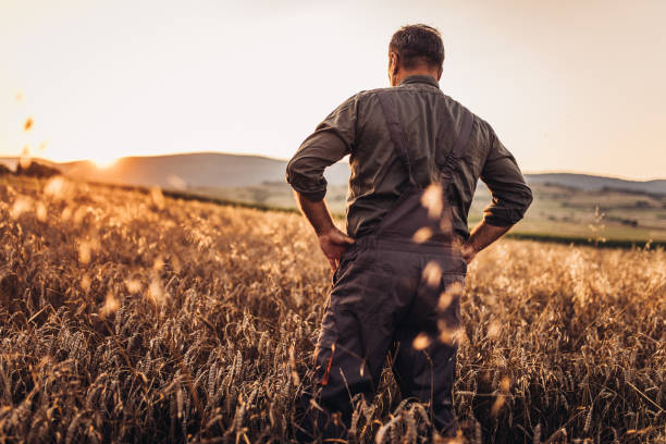 Farmer enjoying in sunset One man, senior farmer standing in the field alone, rear view. rancher stock pictures, royalty-free photos & images