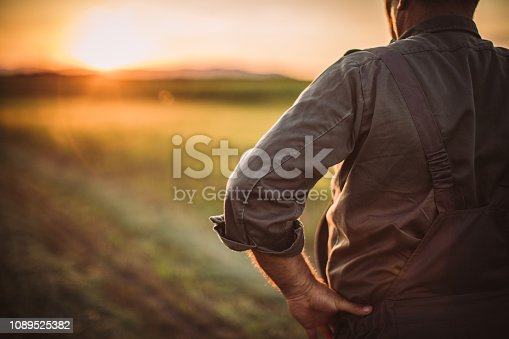One senior farmer standing in the middle of the field after harvest. enjoying in sunset.