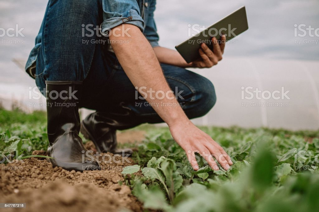 Farmer examinig spinach growth status with digital tablet stock photo