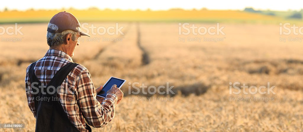 Farmer examinig wheat field status with digital tablet - foto de acervo
