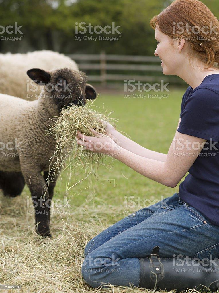 Un agriculteur nourrir un agneau - Photo