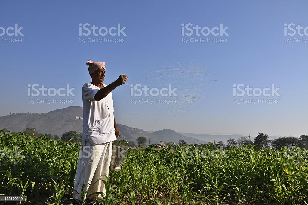 A farmer fertilizing his farm in the morning  royalty-free stock photo