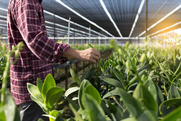 Vegetales frescos de agricultores, agricultura alimentos producción concepto creciente actividad agrícola - foto de stock
