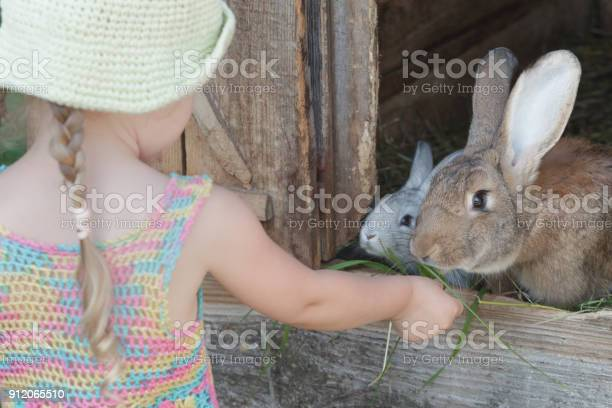 Farmer girl feeding cute domestic rabbits with grass picture id912065510?b=1&k=6&m=912065510&s=612x612&h=elixgjqmtrdgu5fol8wg654r6wqvvvqezbaxsanlrau=