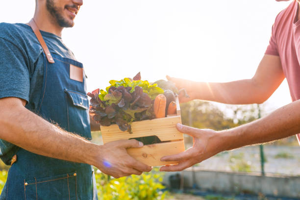 Farmer giving box of veg to customer on a sunny day Farmer selling his organic produce on a sunny day. Farmer giving box of veg to customer on a sunny day. Local farmer talks with customer at farmers' market grocer stock pictures, royalty-free photos & images