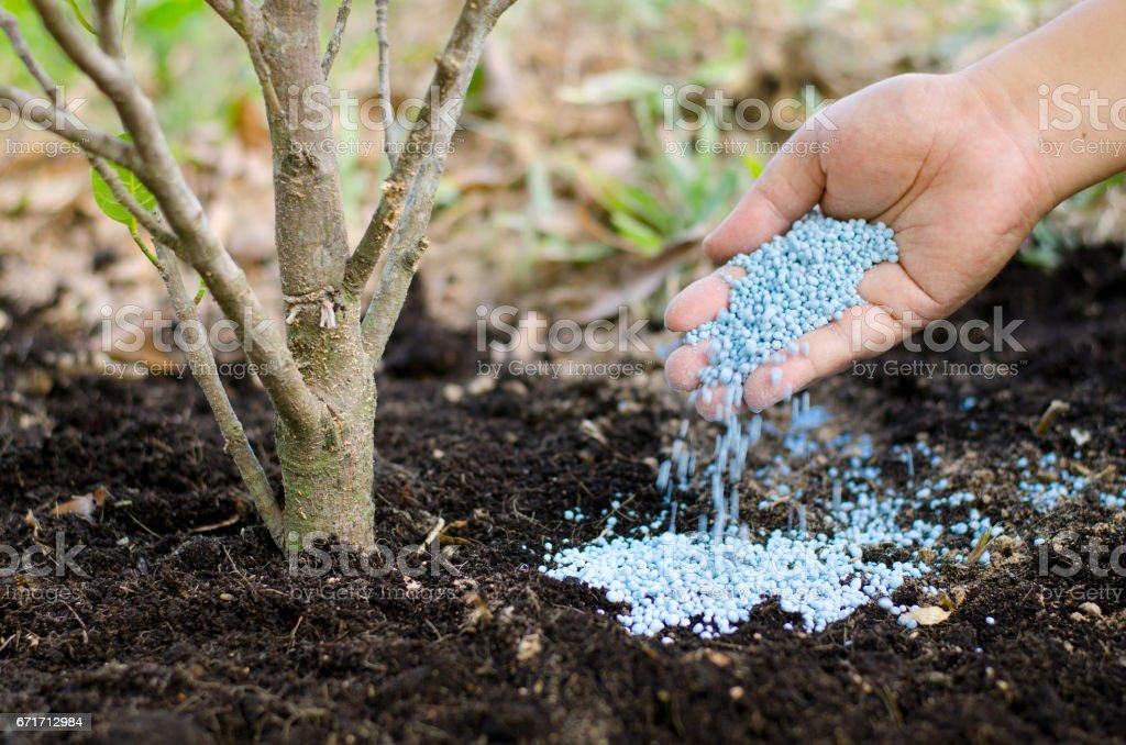 Farmer hand giving chemical fertilizer to young tree stock photo