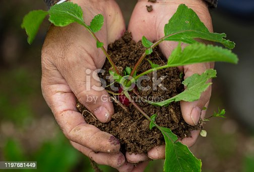 istock Farmer hand holding green plant and soil. 1197681449