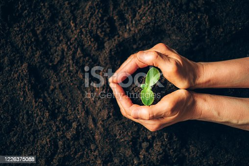istock Farmer hand holding young plant. Top view. Banner. New life, eco, sustainable living, zero waste, plastic free, earth day, investment concept. Gospel spreading. Nurturing baby plant, protect nature 1226375088
