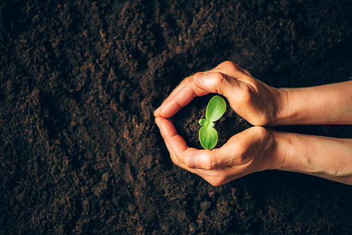 Farmer hand holding young plant. Top view. Banner. New life, eco, sustainable living, zero waste, plastic free, earth day, investment concept. Gospel spreading. Nurturing baby plant, protect nature.