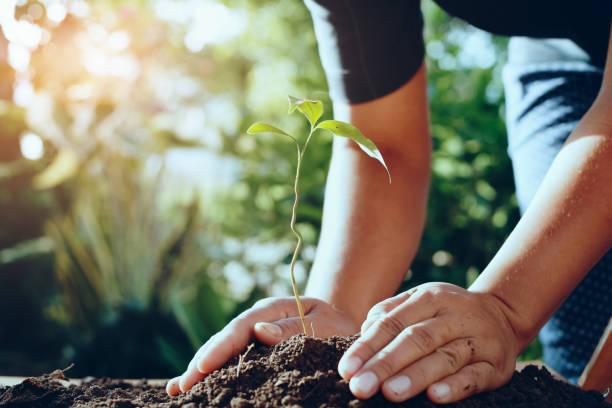 Landwirt pflanzt Baum in Gardren für die Welt zu retten – Foto